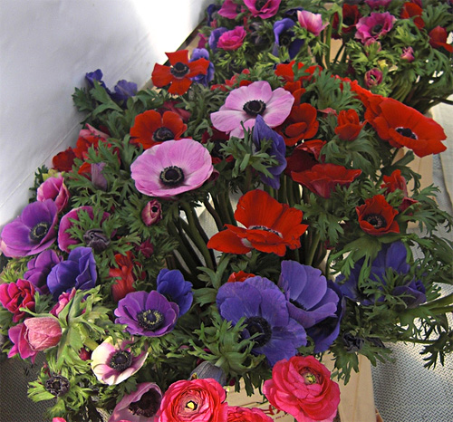 Anemone fresh cut flowers