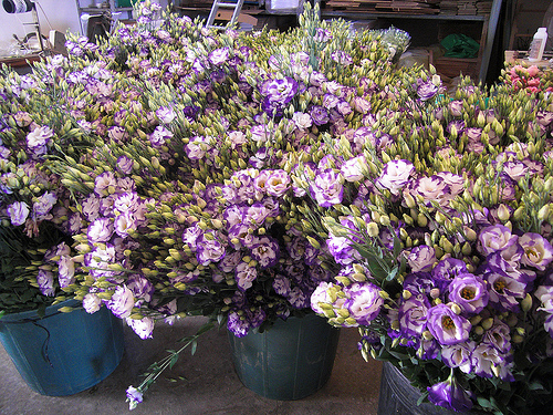 Lisianthus fresh cut flowers
