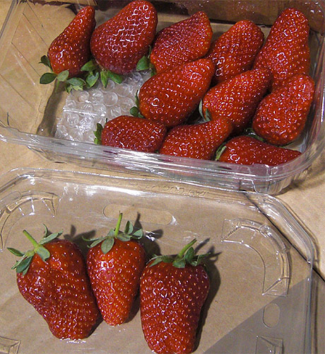 Strawberry selected fresh berries