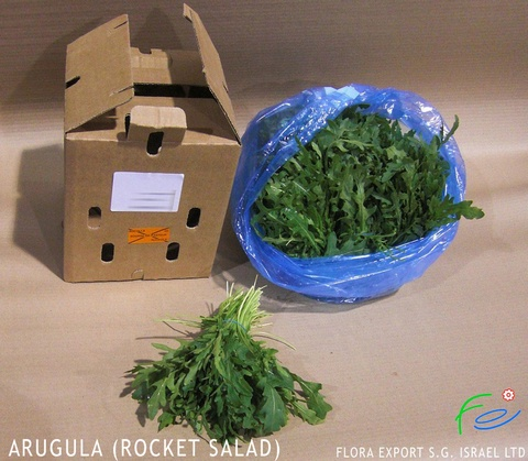 Arugula fresh herb