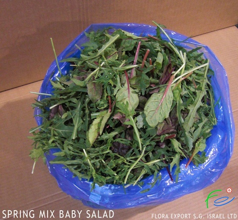 Baby spring mix lettuce